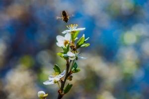ze kwamen als bijen naar de honing